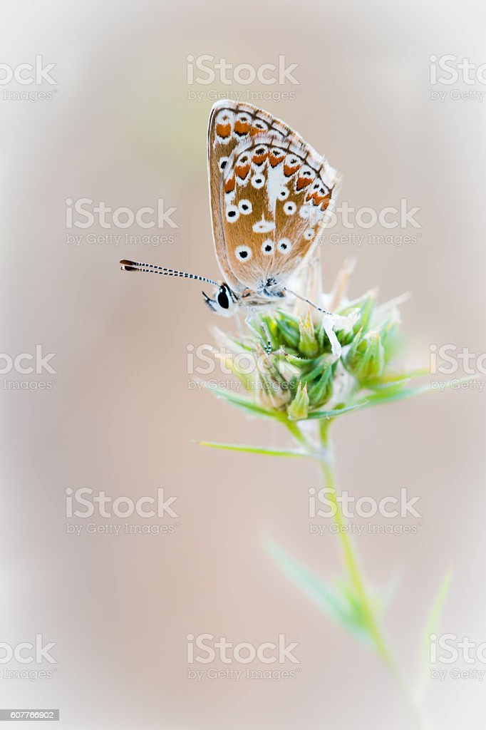 small Butterfly with great detail stock photo