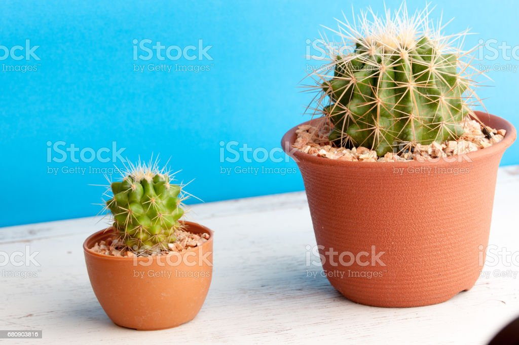 Small cactus in a flowerpot on a  background royalty-free stock photo