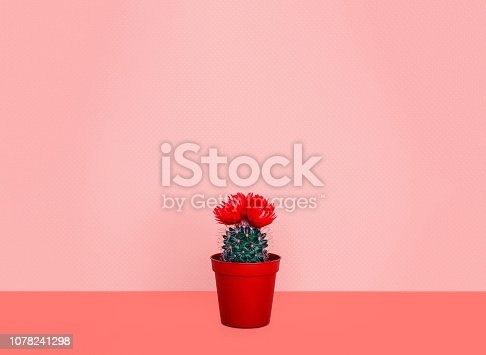 istock Small cactus in a flowerpot on a trendy background. Color of the year 2019. 1078241298