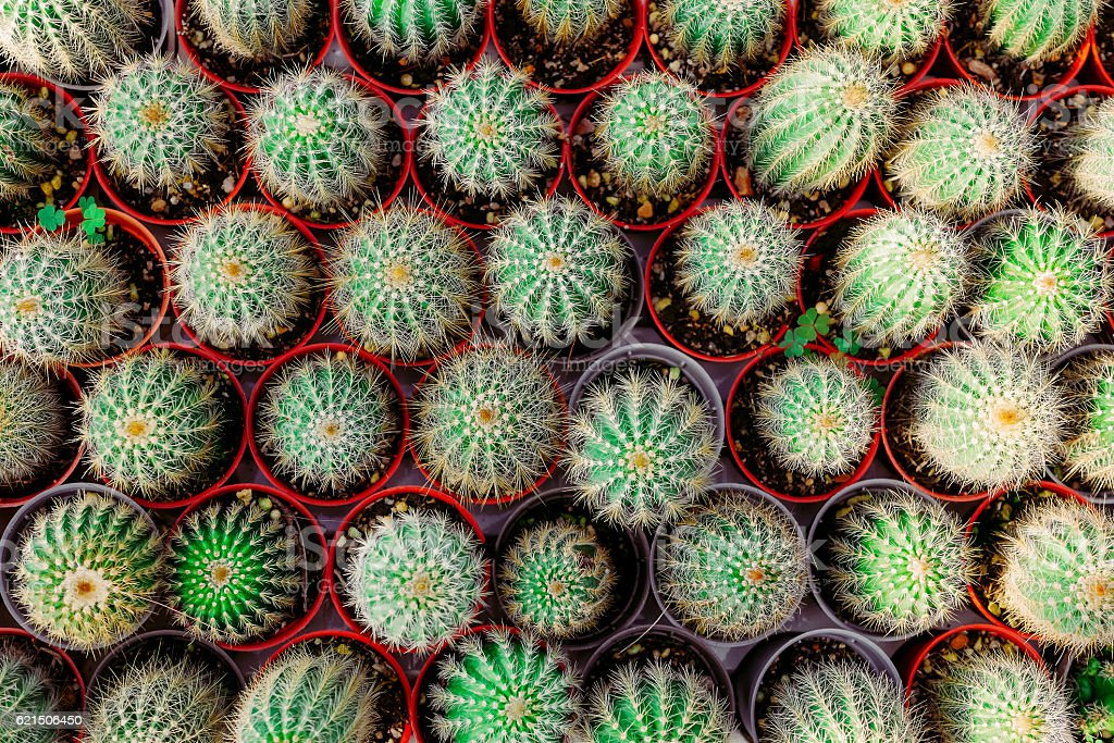 small cactus in a row. Used for background. top view Lizenzfreies stock-foto