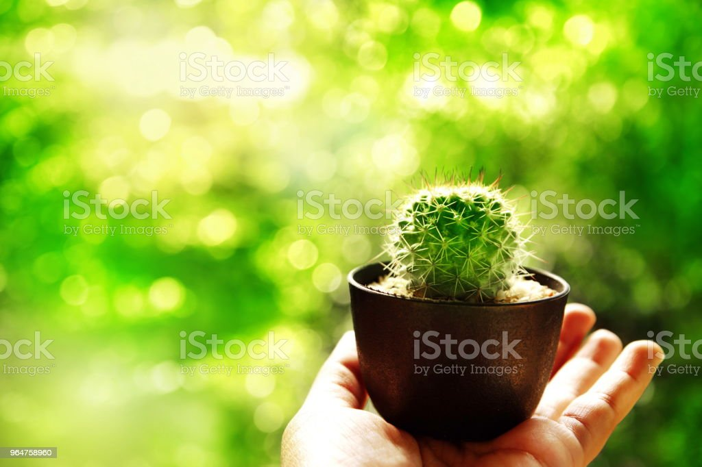 small cactus in pot on woman hand with green abstract nature environmental background royalty-free stock photo