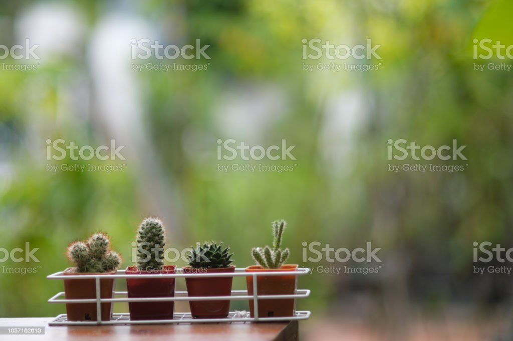 Small Cactus Pot Plant With Green Garden Background In Backyard