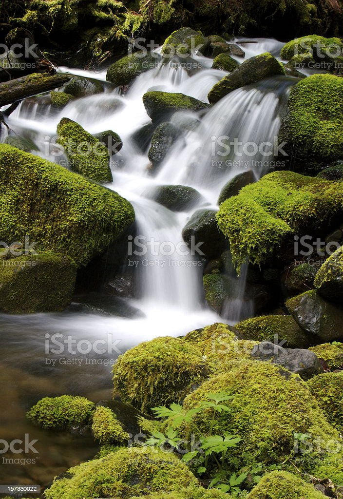 Small Cascades in the Olympic National Park royalty-free stock photo