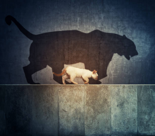 Small cat and a big tiger shadow picture id1166327187?b=1&k=6&m=1166327187&s=612x612&w=0&h=phjafxacyp4a w1mmgiomog9 dmctdim39tdnd7ctoo=
