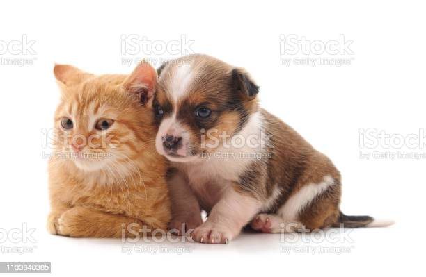 Small cat and puppy picture id1133640385?b=1&k=6&m=1133640385&s=612x612&h=avrd8hwarod f0j2wlf3ehbztsunvpuj9l7c17d ftk=