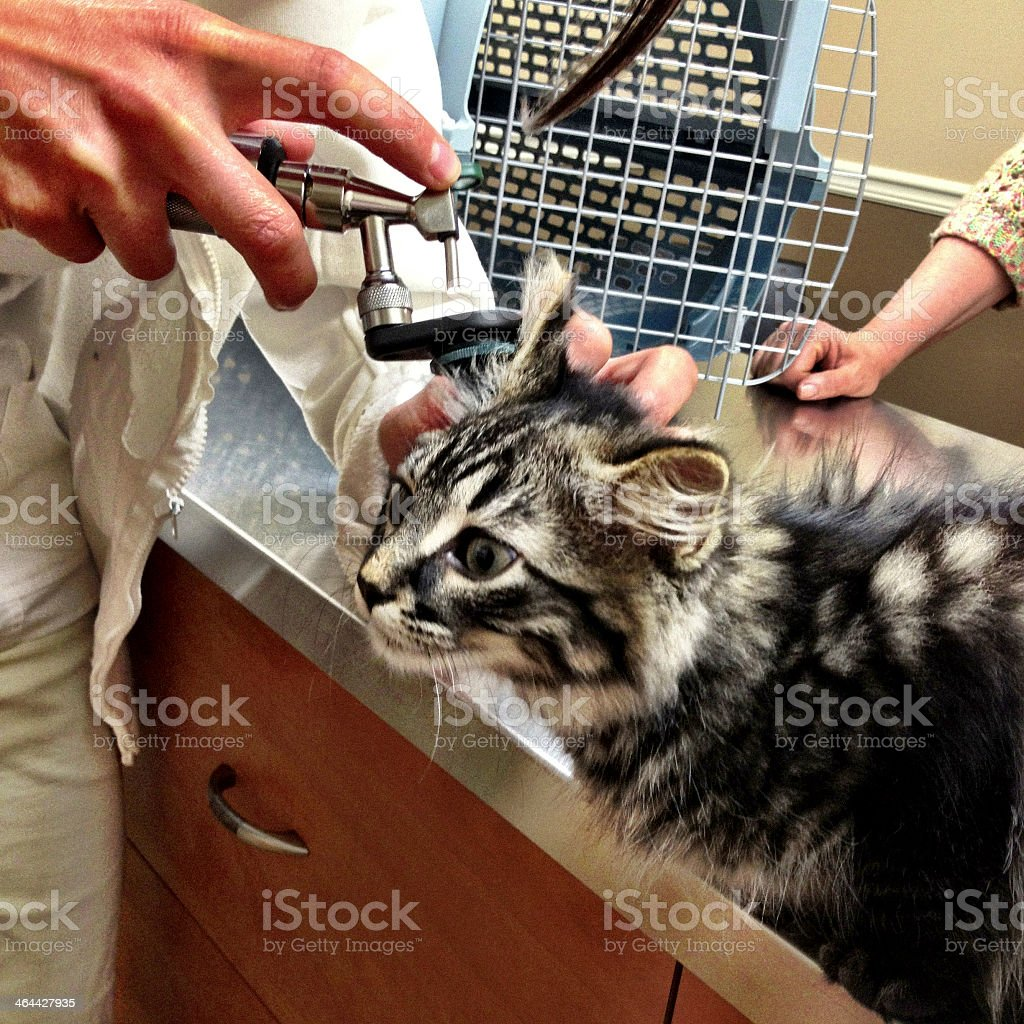 Small Cat at The Vet royalty-free stock photo