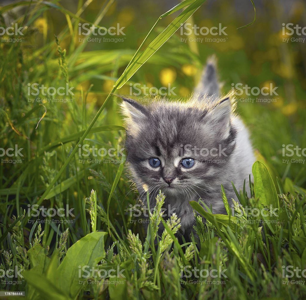 Small cat on a grass royalty-free stock photo