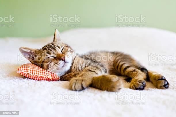 Small cat picture id150877852?b=1&k=6&m=150877852&s=612x612&h=ycs vrmqnrd0lmkncvvqx m7hodpyiz 5krgsjk7b1q=