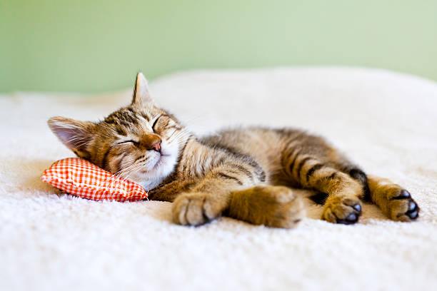 Small cat picture id150877852?b=1&k=6&m=150877852&s=612x612&w=0&h=tfj8hnn3 nzbwy2tgvva1pnavjf3xruexvk9ommnfl0=