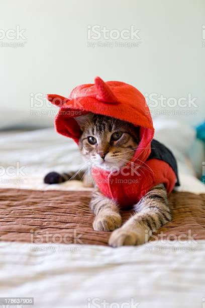 Small cat picture id178637905?b=1&k=6&m=178637905&s=612x612&h=0fvyo6zk1qt3pkbxbwsggjq7 oe8jy oxt hqbzta00=