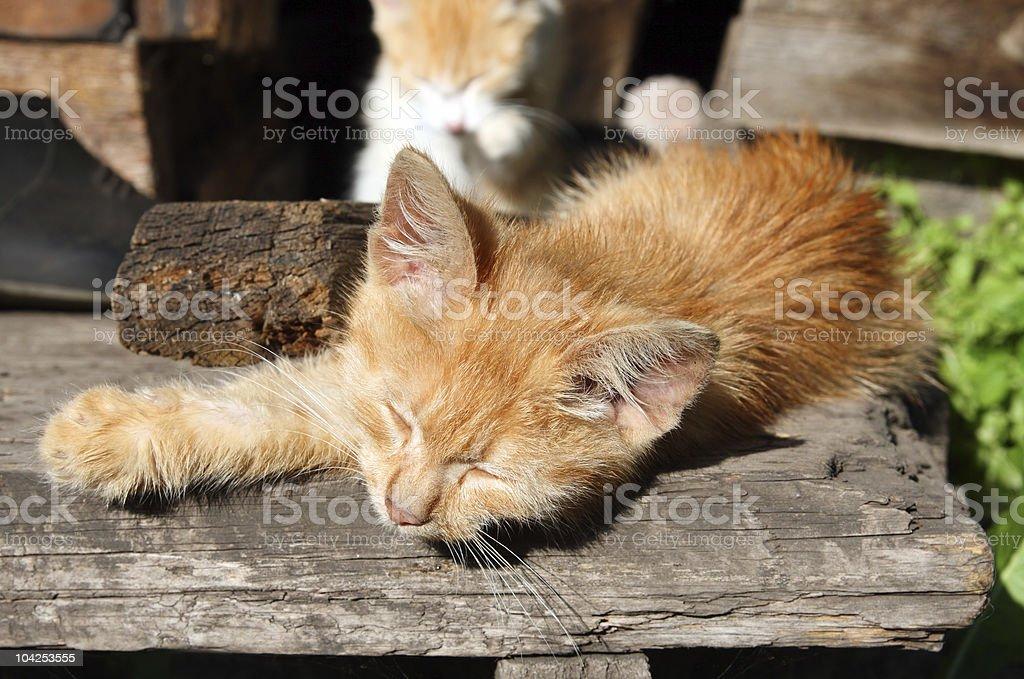 small cat sleeping royalty-free stock photo
