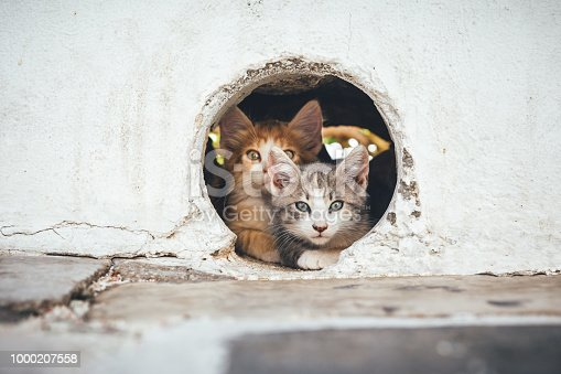 Young kittens resting in a hole in the wall (Milos, Cyclades, Greece).