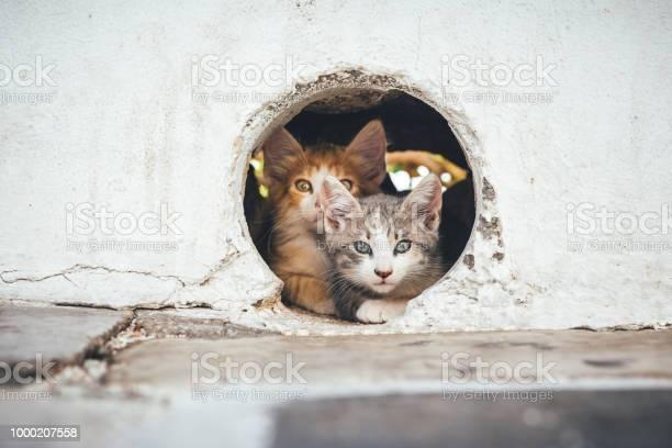 Small cats hiding in a hole picture id1000207558?b=1&k=6&m=1000207558&s=612x612&h=nwnpxocmvwzc2m rwstc4dtocycyvqoqxfcobloguq8=