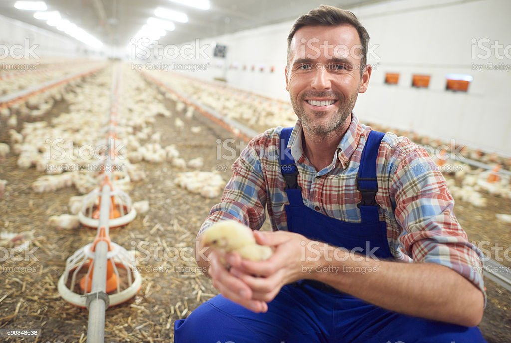 Small chicken and the farmer stock photo