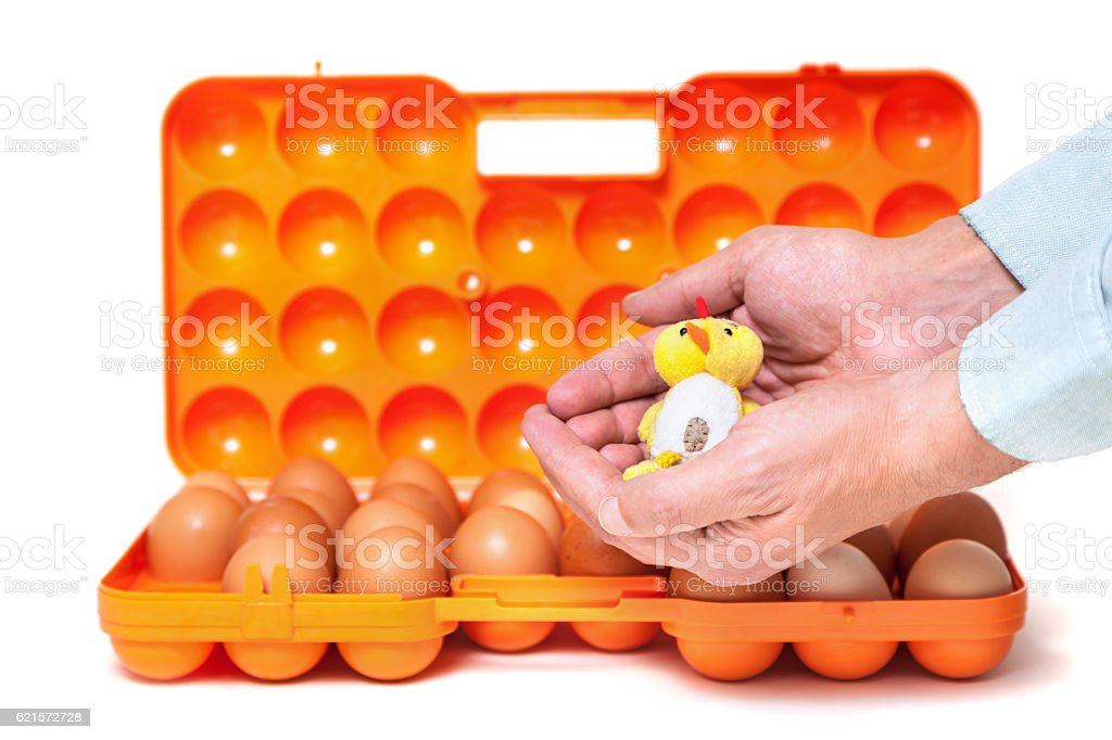 Small chicken in hands container background with eggs photo libre de droits