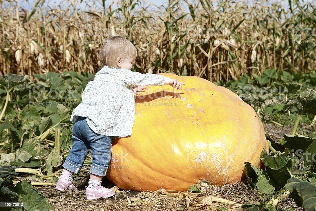Small Child and Gigantic Pumpkin stock photo