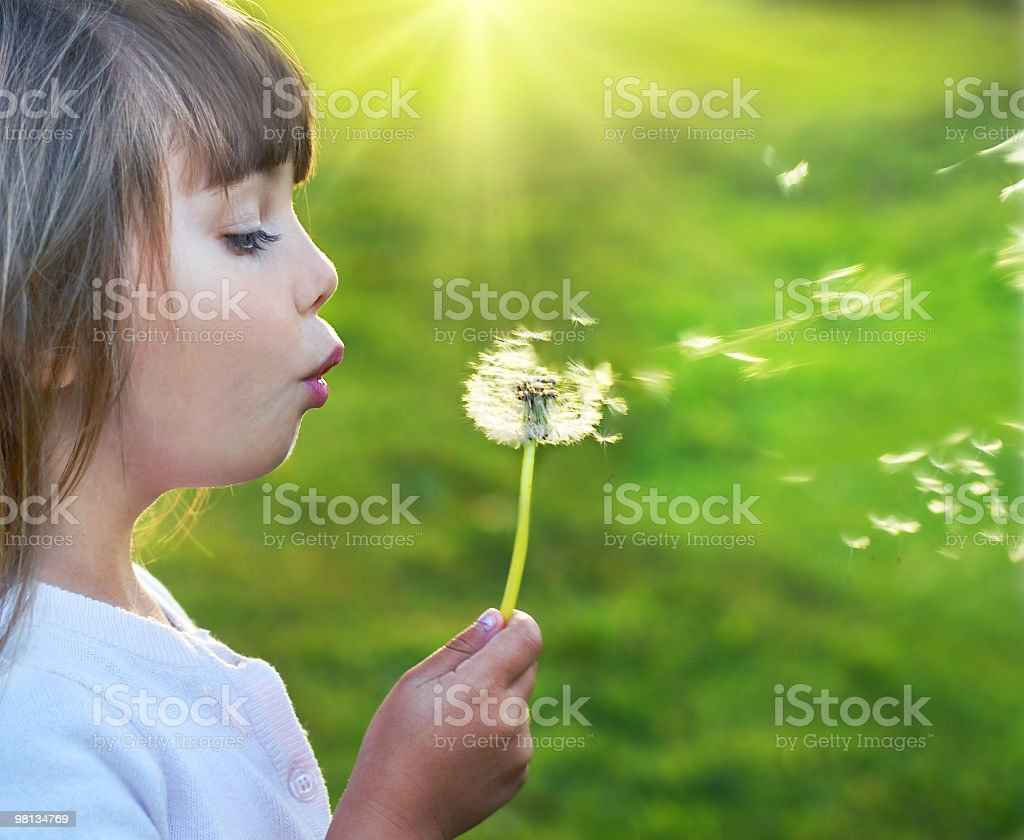 Small child blowing a dandelion royalty-free stock photo