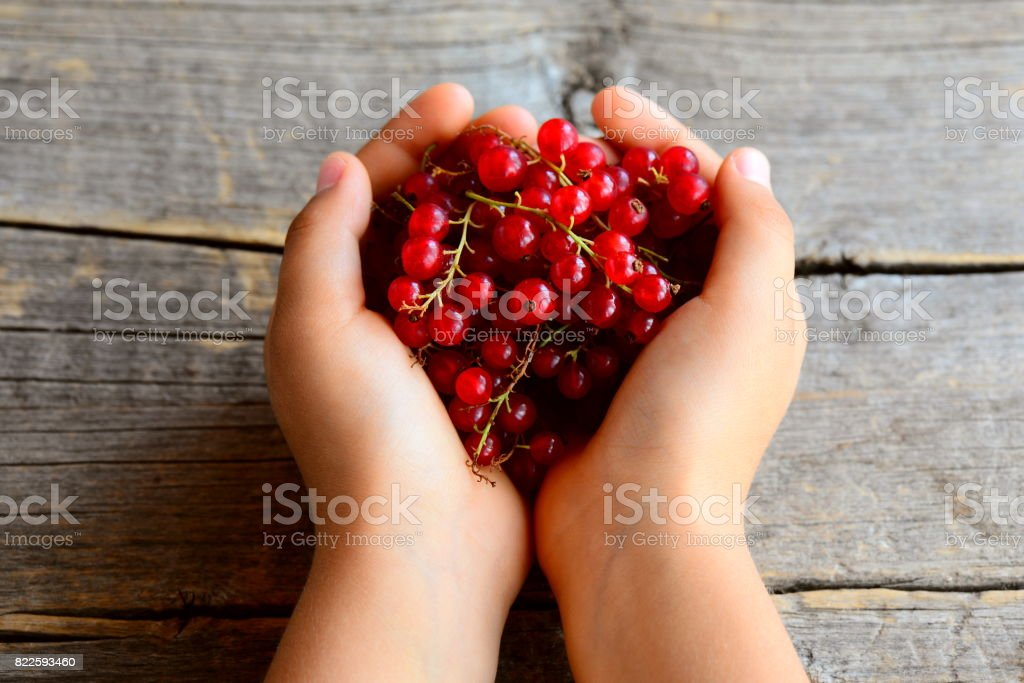 Small child holds a red currant brush in his hands. Ripe red currants. Summer berries background stock photo
