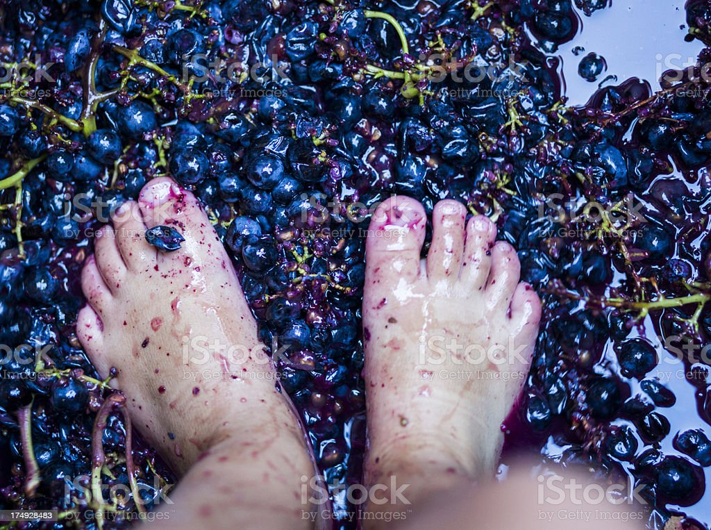 A small child's feet stomping grapes stock photo
