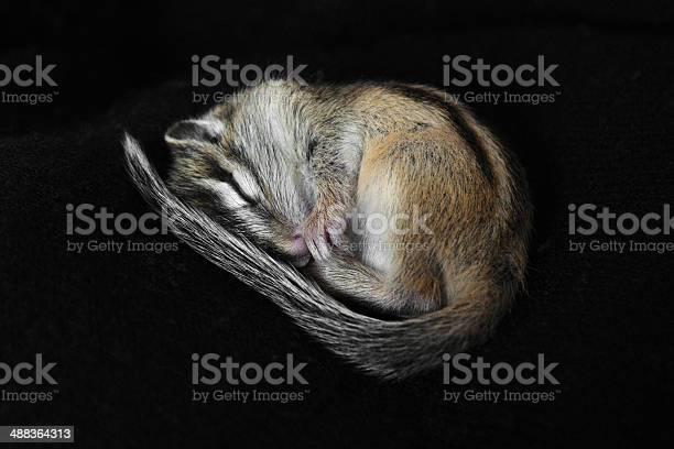 Photo of Small chipmunk