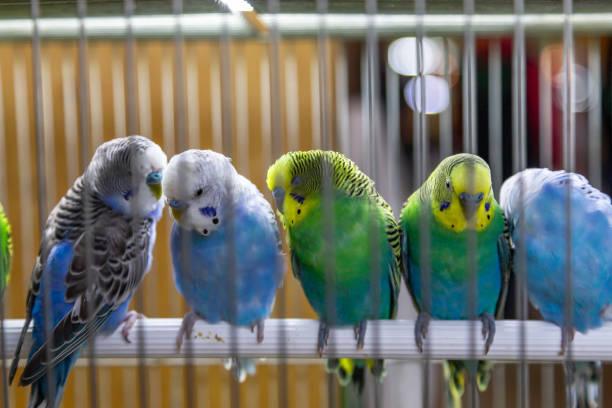 kleine farbige Dekor Vögel im Käfig. – Foto