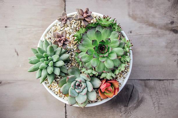 Kleine bunte saftige Pflanzen im Topf – Foto