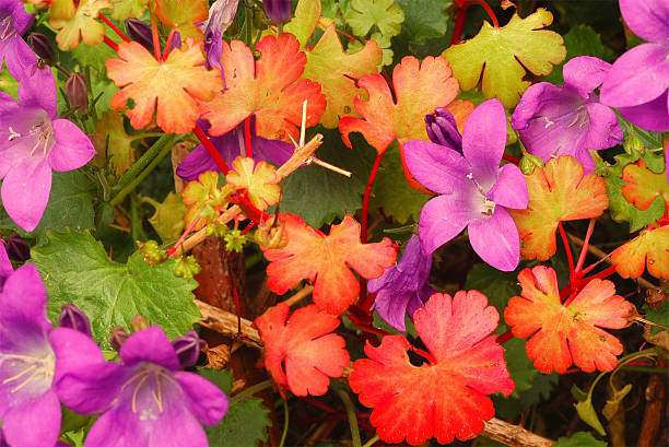 Small coloured flowers and leaves in the autumn – Foto