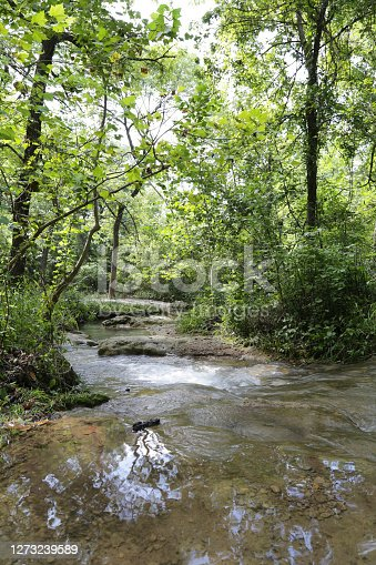 A picture of a small creek and small waterfall inside of a forest