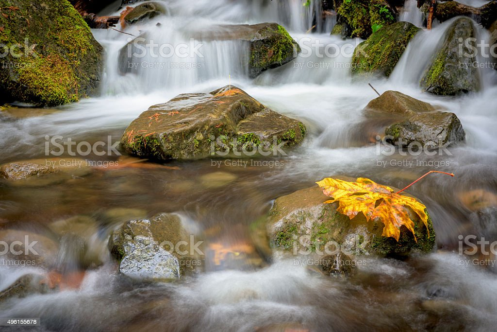 Small creek in the fall with yellow leaf stock photo