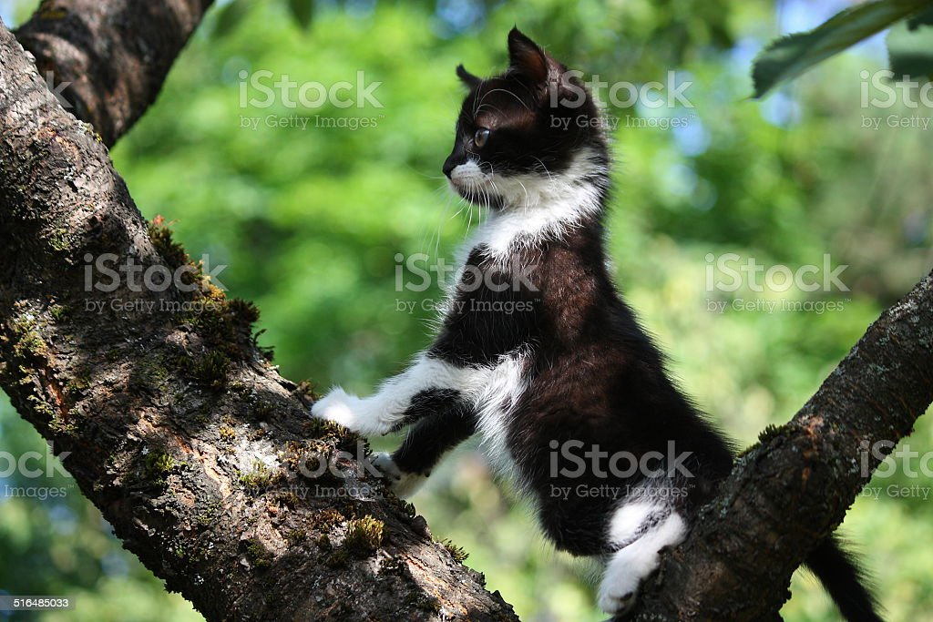 Small cute kitten climbing the tree stock photo