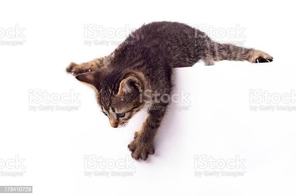 Small cute kitten picture id175410729?b=1&k=6&m=175410729&s=612x612&h=jso9fc5xsqyxlxdtqncejapngfh pmrvib0fkjs477a=
