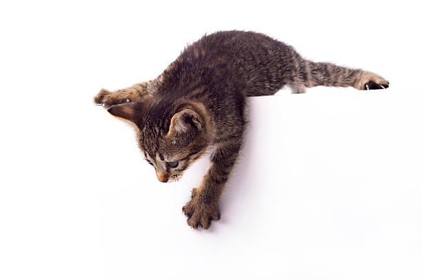 Small, cute kitten