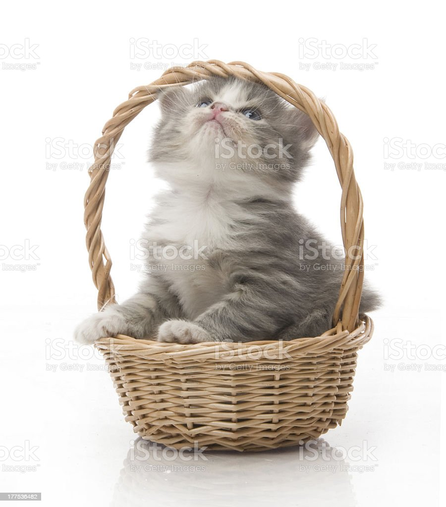 small cute kitten sitting in a basket, close-up royalty-free stock photo