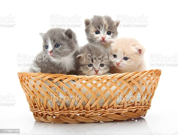 Small cute kitten sitting in a basket closeup picture id177685109?b=1&k=6&m=177685109&s=612x612&h=ze wyjbyeefvjifi2srxtzmyomtie hk9xlj6lsmslq=