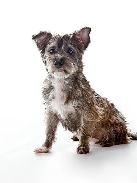 kleine süße mixed-breed dog sieht in die kamera - hunde aus dem tierheim stock-fotos und bilder