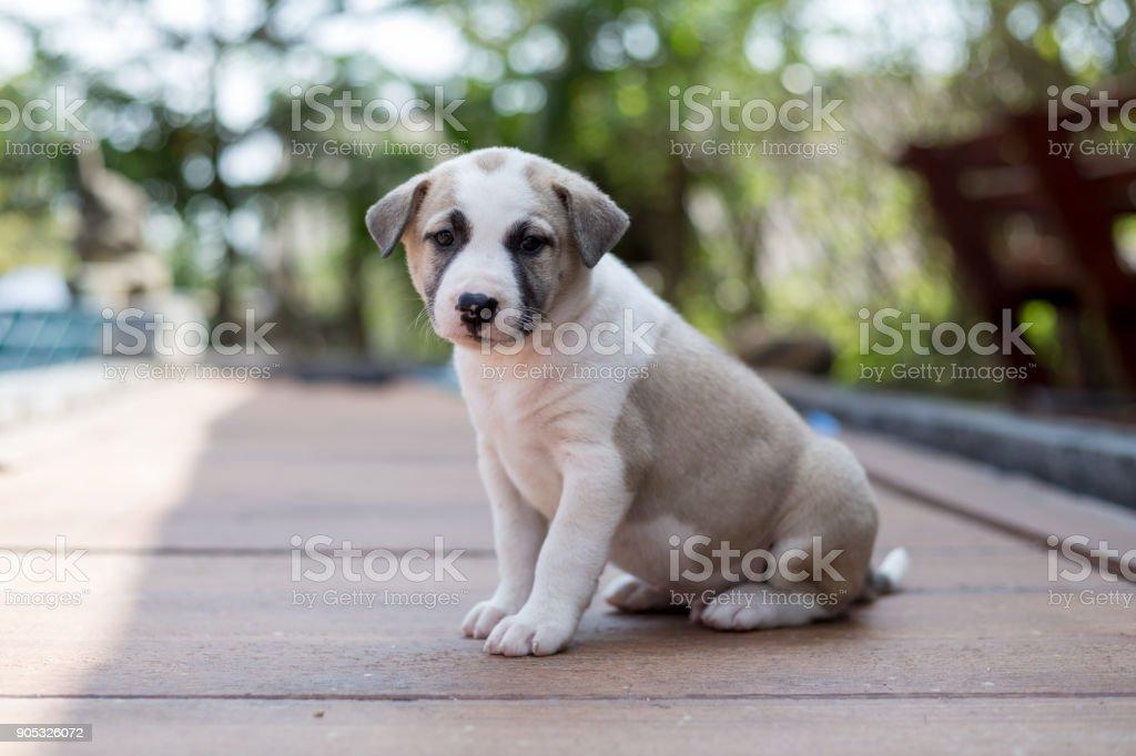small cute puppy dog stock photo