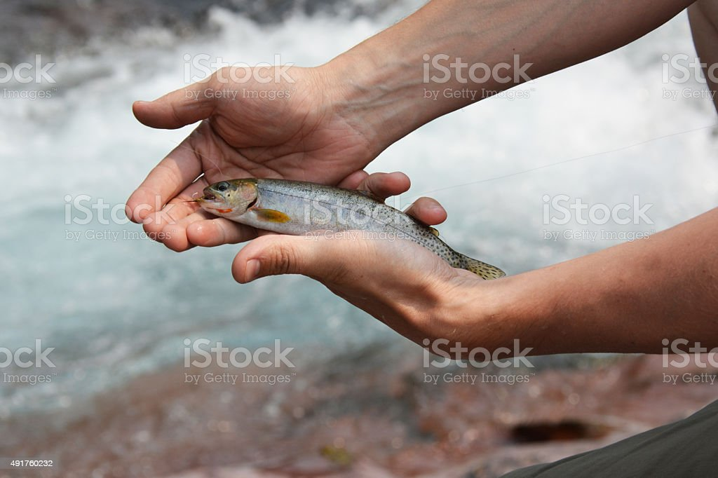 Small Cutthroat Trout in Montana stock photo