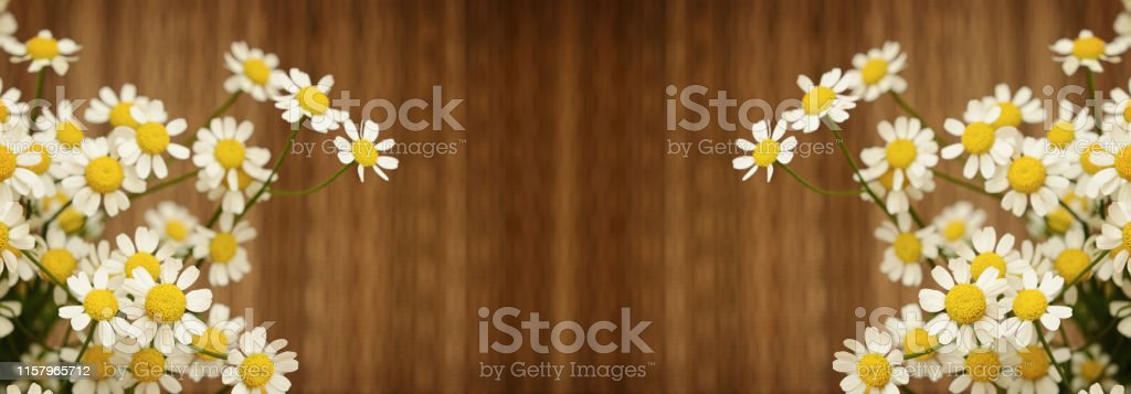 Small Daisy Flowers Stock Photo Download Image Now Istock We make the whole process easy, helping you connect directly with makers to find. https www istockphoto com photo small daisy flowers gm1157965712 316139618