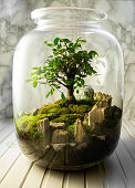 Fern, flower and bonsai compositions Jar with piece of forest with self ecosystem. Save the earth concept. Urban jungle, mossarium