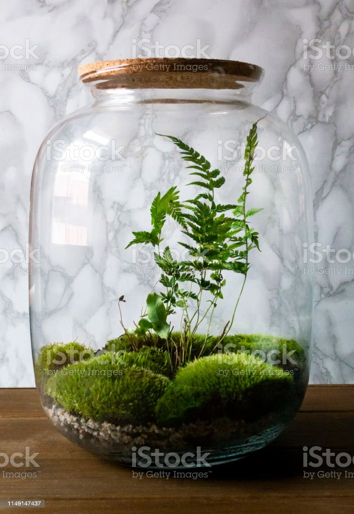 Small Decoration Plants In A Glass Bottlegarden Terrarium Bottle Forest In A Jar Stock Photo Download Image Now Istock