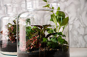 Small decoration plants in a glass bottle/garden terrarium bottle/ forest in a jar.