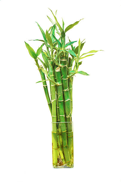 Small decorative bamboo stock photo