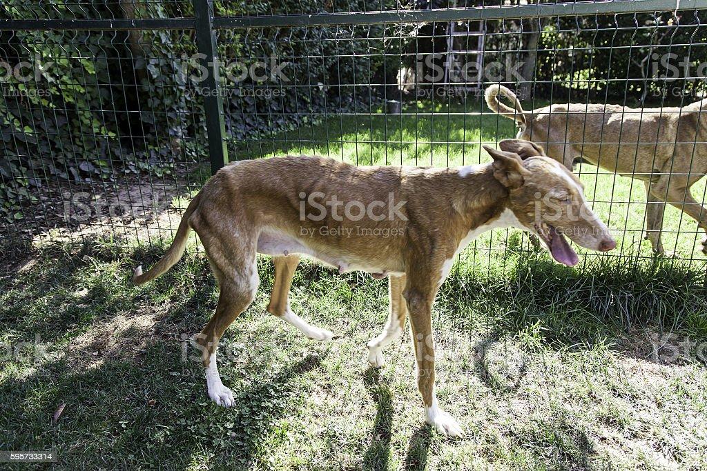 Small dog abandoned stock photo
