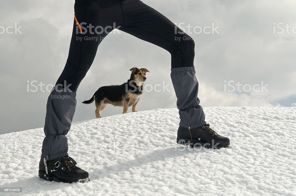 Small Dog and His Friend on Snowy Mountain royalty-free stock photo
