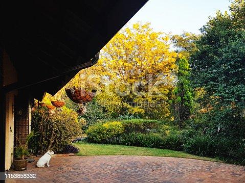 Pet dog admires a neat, lush garden.
