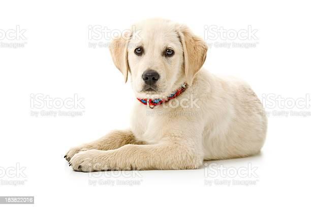 Small dog picture id183822016?b=1&k=6&m=183822016&s=612x612&h=xlopwhxae1cg8mb6mnhav6yrbovox4jcgddgepqo us=