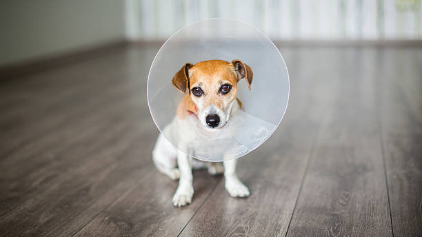 Small dog with Collar stock photo