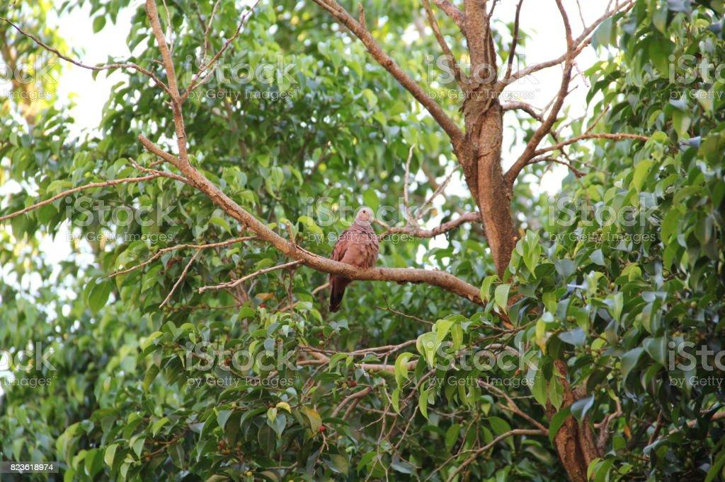 Small Dove stock photo