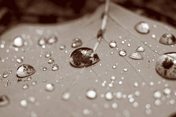 Small Droplets stock photo