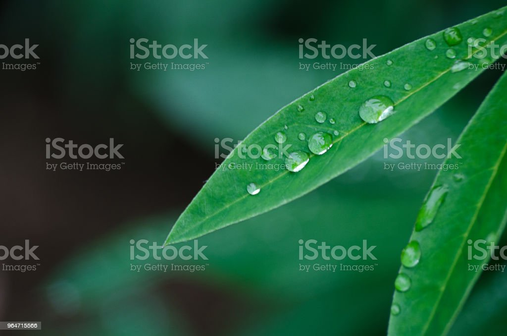 Small drops of dew on fresh green grass in the morning royalty-free stock photo